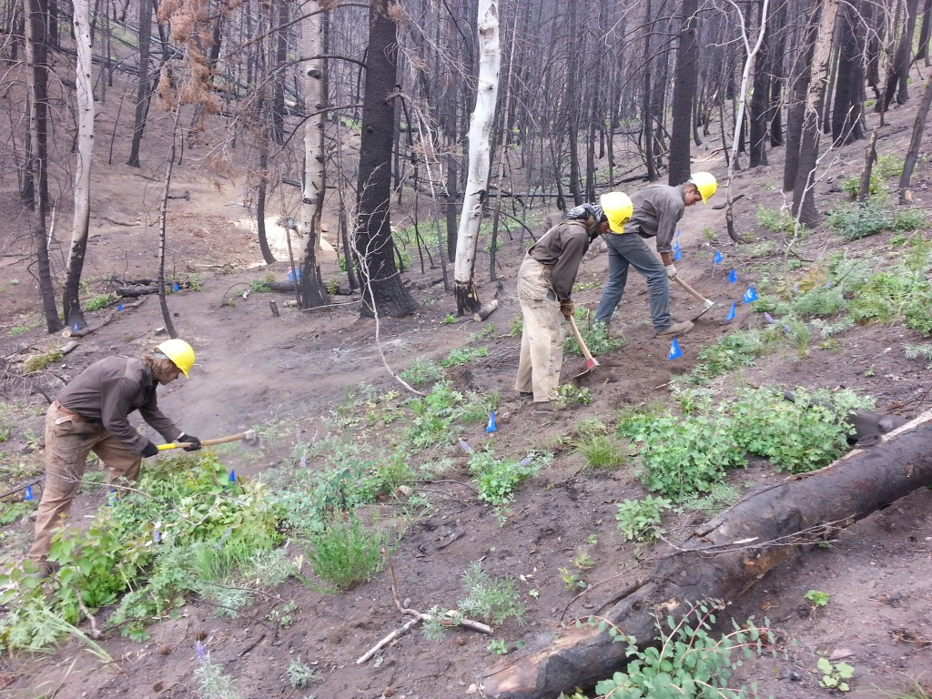 NYC crew members working on a reroute on Greenhorn Tr. #156