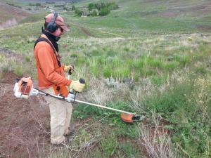 John getting brushing back weeds growing on Punchline Trail